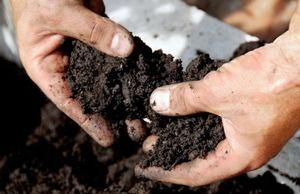 Как самому определить влажность и кислотность почвы