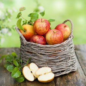 Как сохранить свежие яблоки на зиму в теплице?