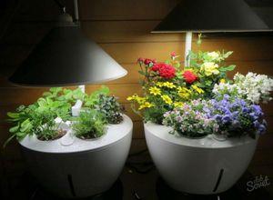 Как выбрать лампы для досвечивания рассады