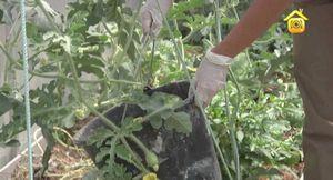 Как выращивать арахис в средней полосе россии: культивирование в открытом грунте
