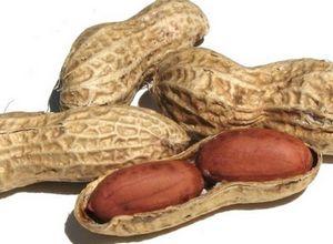 Как вырастить арахис из семян?