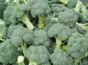 Как вырастить капусту брокколи? советы специалистов