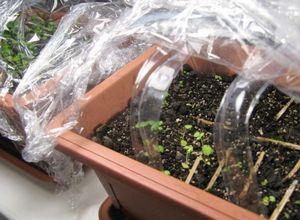 Как вырастить клубнику из семян в домашних условиях