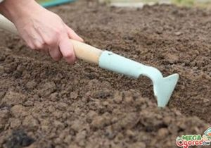 Как вырастить сосну из семян - от посадки до ухода