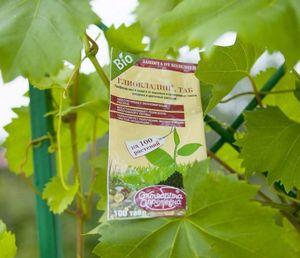 Как защитить баклажаны от вредителей: колорадского жука и тли