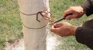 Как защитить плодовые деревья