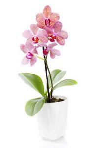 Какая подкормка нужна для орхидей?