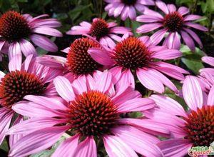 Какие многолетние цветы для клумбы лучше выбрать и как их разместить