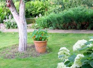 Какие преобразования в саду можно сделать осенью