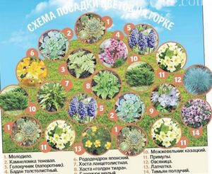 Какие растения выбрать для альпийской горки