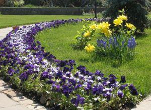 Какую почву выбрать для цветника?