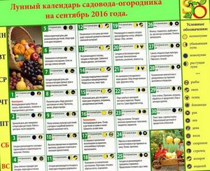 Календарь садовода и огородника на сентябрь 2014