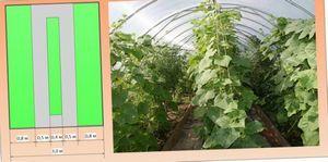 Календарь защитных мероприятий для овощей на открытых грядках