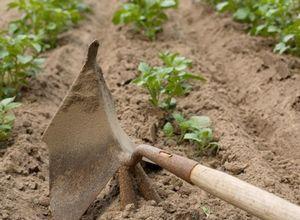 Картофель - уход и почва