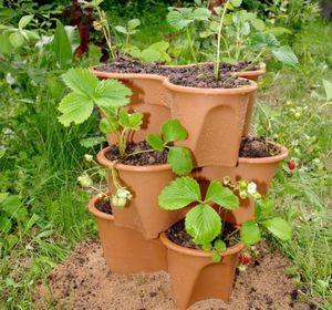 Клубника в мешках - лучшие сорта, подготовительные работы и правила выращивания
