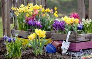 Клумба непрерывного цветения: виды сезонных цветов и советы по оформлению клумбы