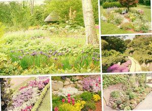 Когда и где высаживаем цветы в саду?