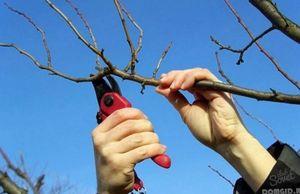 Когда лучше обрезать дерево, какие факторы влияют на время обрезки