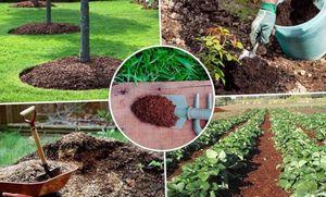 Компост – источник плодородия почвы