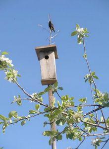 Квартирный вопрос, или каждой птахе - отдельное жильё!!!