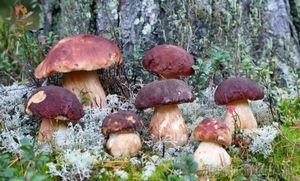 Квашеные грибы