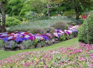 Лучшее украшение территории – многолетние цветы