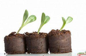 Лучшие емкости для рассады – помощь в выборе огороднику