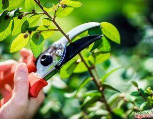 Лучшие сорта персика и особенности выращивания на участке