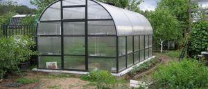Лук-порей из семян: особенности выращивания в теплице