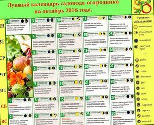 Лунный календарь огородника на октябрь 2015