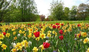 Лужайки цветов в саду