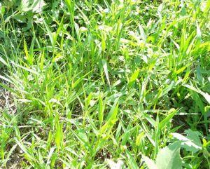 Меры борьбы с многолетними сорняками