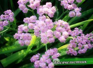 Многолетники на даче - виды и правила выращивания цветов