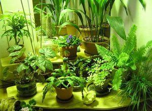 Мой зимний сад! мой живой уголок природы дома !
