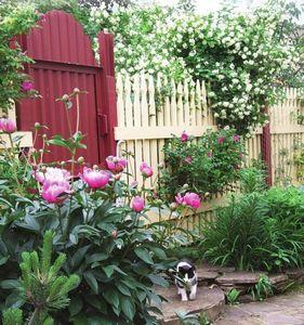 Монолог садовой волшебницы