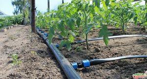 Монтаж системы автоматического полива в саду