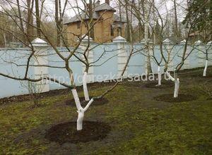 Обрезка плодовых деревьев. обрезка сада весной.