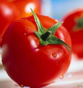 Описание и характеристика сортов томатов устойчивых к фитофторе