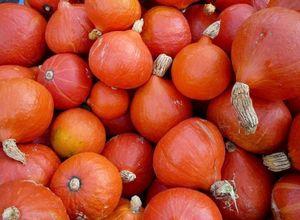 Описание и выращивание лучших сортов тыквы на своем участке