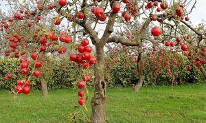 Опоры для плодовых деревьев в саду