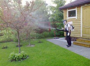 Опрыскивание деревьев осенью мочевиной от вредителей сада