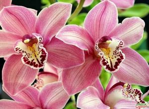 Орхидеи на фото: виды и названия утонченных красавиц