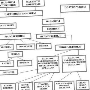 Особенности и классификация сорняков