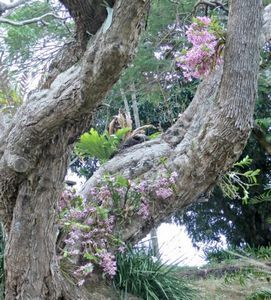Особенности выращивания орхидеи венерин башмачок