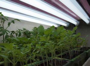 Освещение рассады в домашних условиях — какие лампы для рассады лучше?