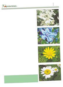 Ответы на ряд вопросов по выращиванию календулы – ноготков