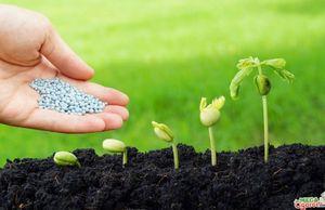 Пестициды: это сельскохозяйственные химические препараты для защиты растений