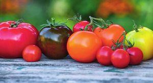 Победим фитофтору: выбираем правильные сорта томатов