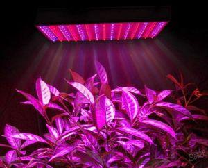 Почему важно освещение рассады и что нужно учесть при выборе ламп