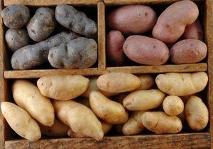 Подготовка места и температура хранения картофеля